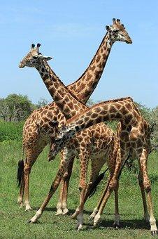 Tenter de faire un safari en Tanzanie pour vos prochaines vacances!